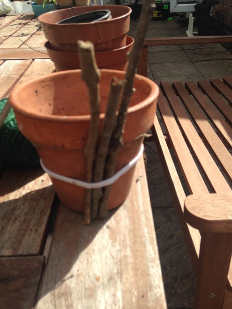 pot project