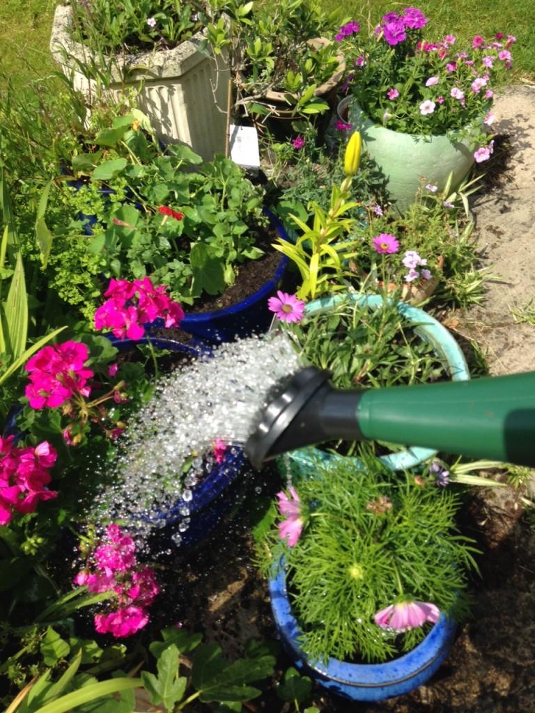 rhino watering can