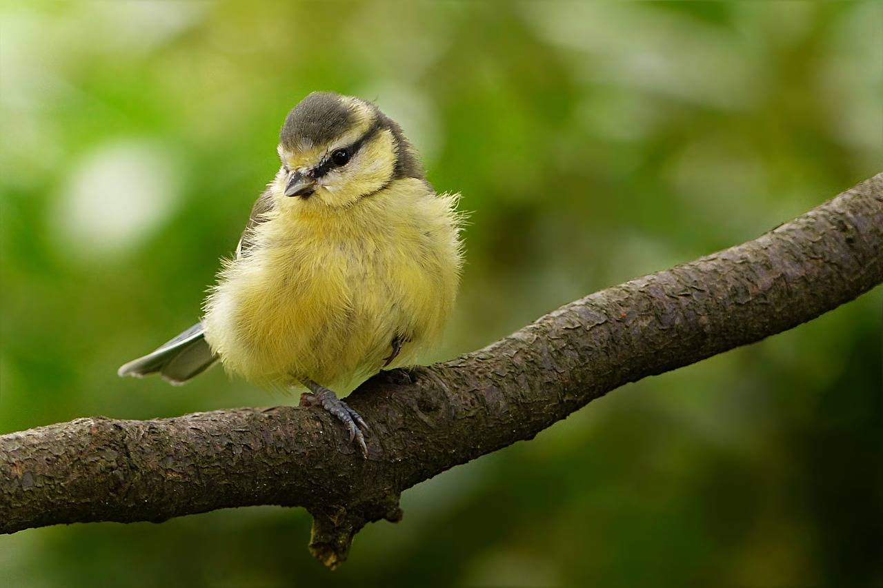 How to Embrace Other Animals Into Your Garden Whilst Trying to Attract Wild Birds